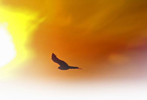 Anonimo, Falchetto al tramonto, dal web