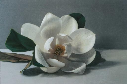 Gionata Alfieri, Magnolia Grandiflora