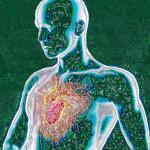 Il mio cuore pulsante, dal web, elab. grafica mia