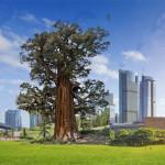 Marcello Comitini, L'albero-dio, digitalArt